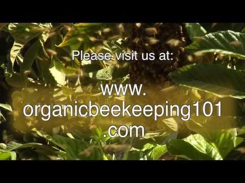 Organic Beekeeping 101