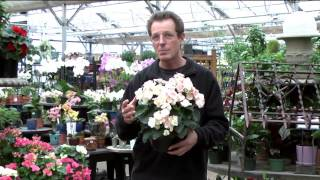 <h5>1/17/15 - Tropical Plants</h5>