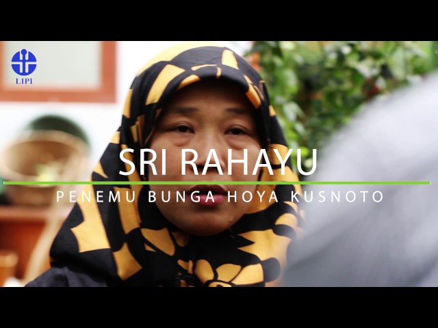Sri Rahayu Penemu Bunga Hoya Kusnoto
