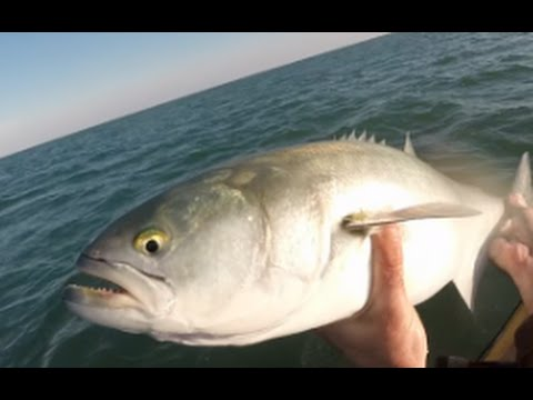 NJ January Bluefish, Striped Bass and Herring Fishing
