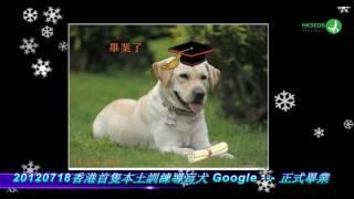 <h5>香港導盲犬服務中心2012年工作回顧(2k)</h5>