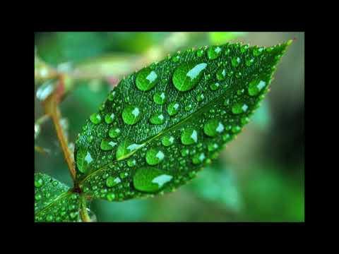 Серебрянная роса