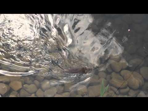 рыбалка в краснодаре на карасуне