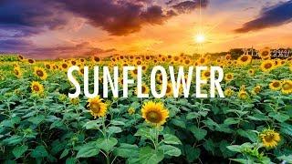 Post Malone, Swae Lee – Sunflower (Lyrics) 🎵