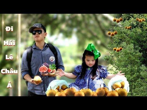 Đi Hái Trái Cây  | Asian Pears Picking - Thời lượng: 21 phút.