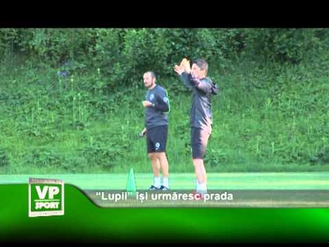"""""""Lupii"""" își urmăresc prada"""