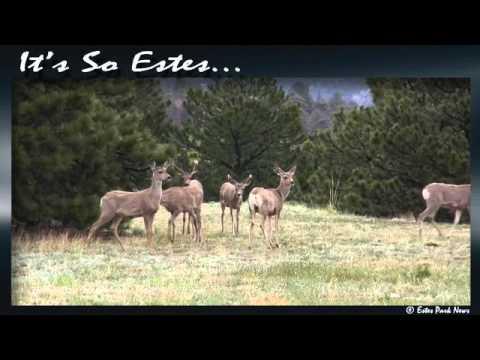 It's So Estes!