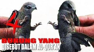 Video SUBHANALLAH!!! INILAH 4 BURUNG YANG DISEBUT DI DALAM AL QUR'AN MP3, 3GP, MP4, WEBM, AVI, FLV April 2019