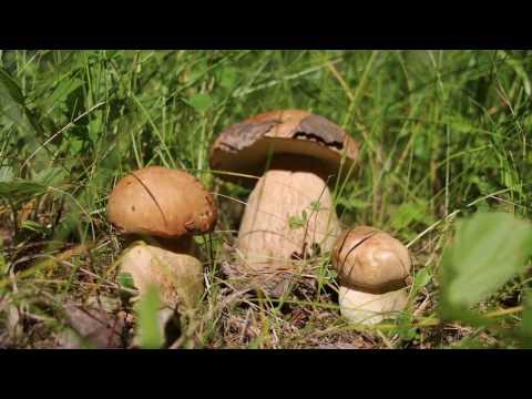 Красивая природа и звуки леса