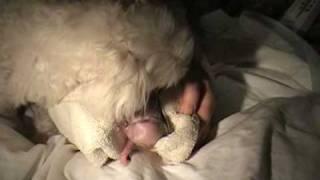 Amazing Dog Birth!