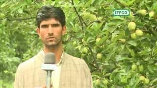 Kashmir & Water Soluble Fertilisers