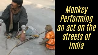 Funny Animal Videos Funny Monkey Video For Kids Performing A Play 2