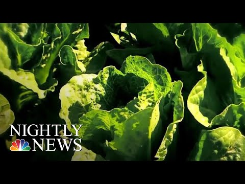 Don't Eat Romaine Lettuce, CDC Cautions After E. Coli Outbreak | NBC Nightly News
