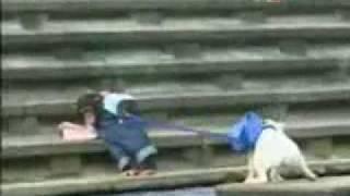 קוף מציל כלב