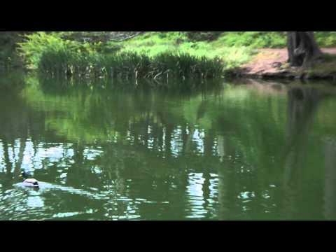Tekst piosenki Sarah Vaughan - Close to You po polsku