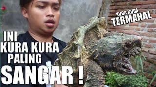 Video MONSTER TURTLE !!! UNBOXING KURA KURA PURBA TERMAHAL MP3, 3GP, MP4, WEBM, AVI, FLV April 2019