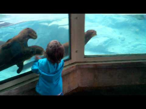 Otters Playing Chase With Little Girl