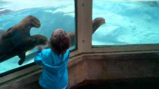 Cute Otters Chasing Little Girl