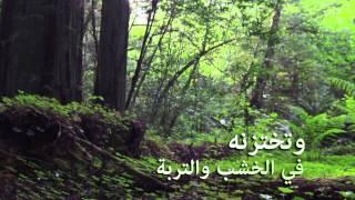 اليوم الدولي للغابات 2015