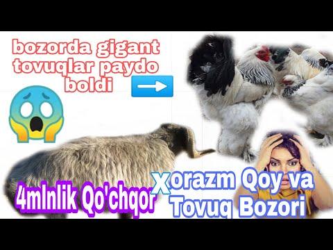 Xorazm Qo'y va Tovuq Bozori 23 августа 2019 г. Uzlider n1