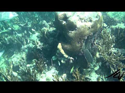 Best Riviera Maya Resorts for Snorkeling