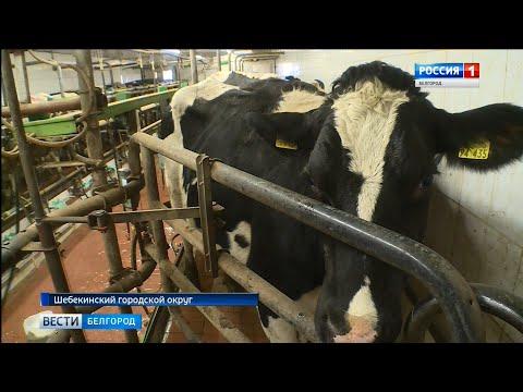 Животноводы области планируют увеличить производство молока