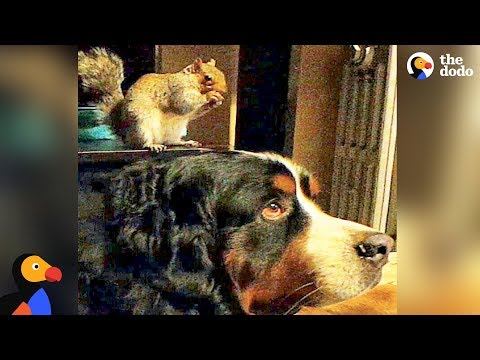 lo-scoiattolo-e-il-suo-grande-fratello-cane