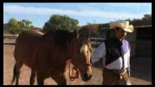 Soy un ranchero Caballo Dorado