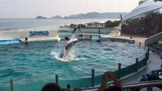 Kamogawa Japan  City new picture : Sea World kamogawa Japan slo-motion killer whale 2016!