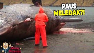 Video Jangan Sembarangan Membelah Perut Ikan Paus, Kalo Gak Mau Kaya Gini MP3, 3GP, MP4, WEBM, AVI, FLV Februari 2019
