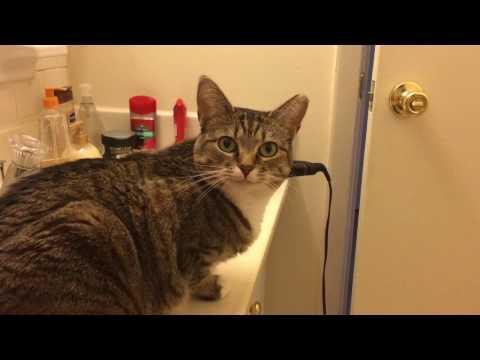 飼主不管怎麼叫這隻「高冷貓」都懶得理,但只要聽到這三個字後… 說好的高冷呢?