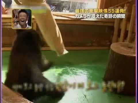 リアクション芸人の鏡? とにかくビビりまくる小心者の小熊ちゃん
