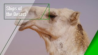 Ships of the Desert - The Secrets of Nature