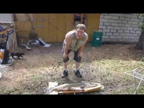как чистить щуку видео от чешуи