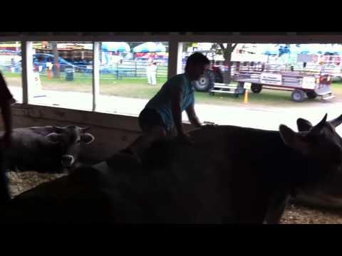 """Brent """"Bull-Riding"""""""