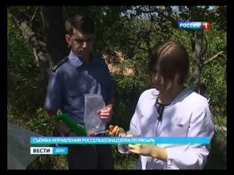 В ростовских садах инспекторы Россельхознадзора болезней плодовых культур не нашли