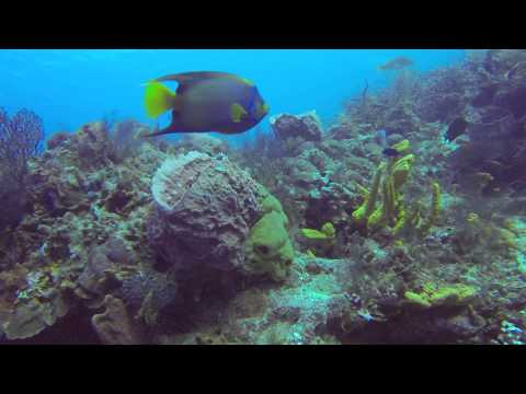 Queen Angelfish – Cozumel