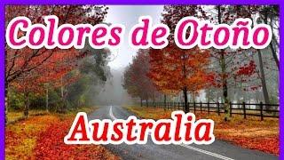 Mount Wilson es un de jardín de patrimonio a sólo dos horas de Sydney. La zona cuenta con magníficos bosques y selvas,...