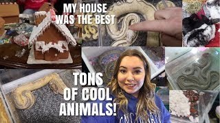 Taylor Reptile Expo + Making Gingerbread Houses! | Vlogmas Day 9 by Emma Lynne Sampson