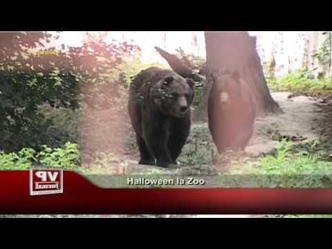 Halloween la Zoo