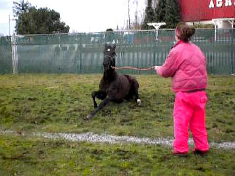 Paco going nuts!!- first time on grass while on stall rest