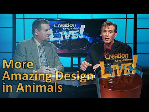 More Amazing Design in Animals (Creation Magazine LIVE! 5-22)