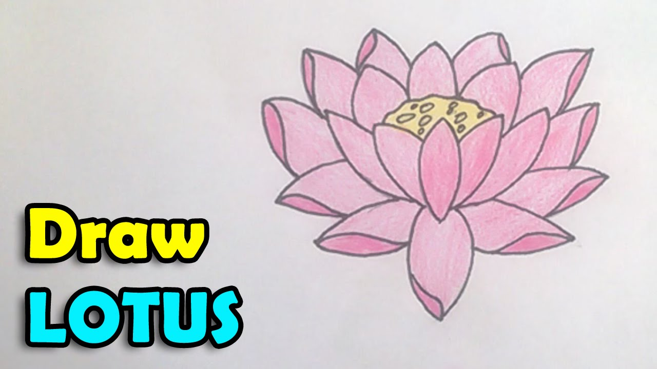 How To Draw A Lotus Flower Step By Step How To Make A Paper Rose With Easy  Stepbystep Instructions