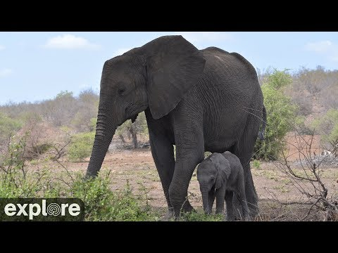 Wildtiere in Afrika - Africam Tembe Elephant Park  ...
