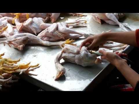 come sono realmente i polli che mangiamo sulle nostre tavole! assurdo!