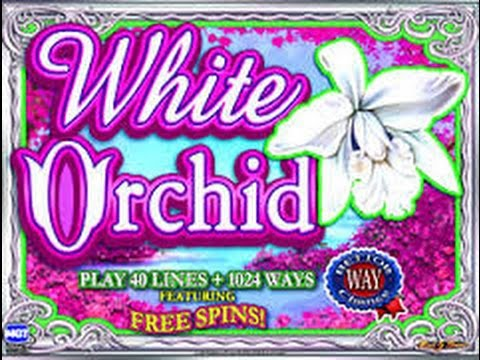 $4 Bet IGT WHITE ORCHID Multiple retriggers BIG WIN 5c Denom