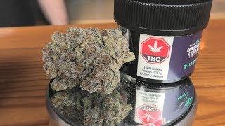 Qudra Marijuana Monday by Urban Grower