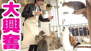 猫カフェ貸切で大暴走!