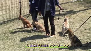 捨て犬が3年以上の訓練を経て災害救助犬に!殺処分寸前だった「夢之丞(ゆめのすけ)」