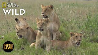 Video Safari Live - Day 285 | Nat Geo Wild MP3, 3GP, MP4, WEBM, AVI, FLV Juni 2019